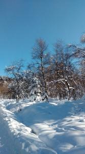 Sněžník (1)