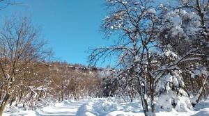 Sněžník (2)