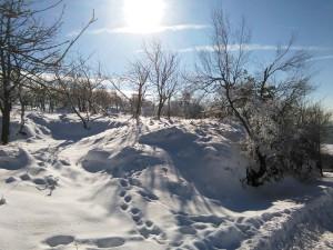 Sněžník (8)